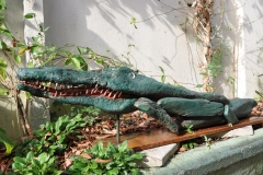 "CROCODILE: 54"" Not For Sale"