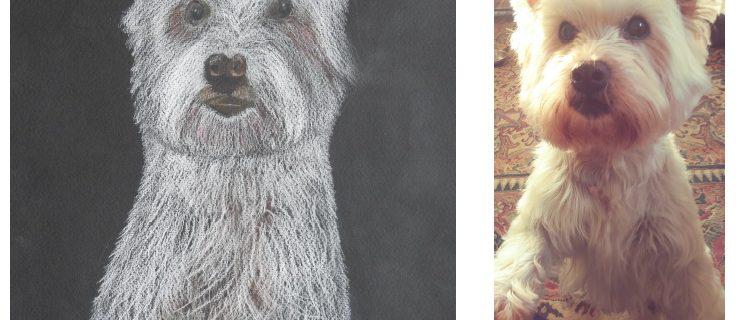 Elsa Scottish Terrier